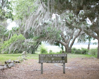 Beaufort South Carolina Trees Spanish Moss Low Country South Photo Photography Print 8x10 Decor Art
