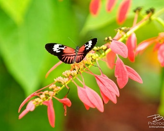 Nature Photography Print, Landscape Photo, Nature Wall Art, Coral and Green, Butterfly Photograph, Outdoor Picture