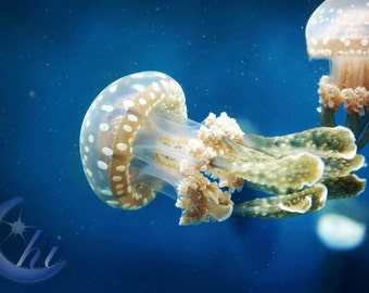 Nature Photography.  Jellyfish and Sea life Photography. 8x12 Print