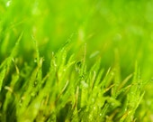 Fresh Green Wall Art | Spring Grass Macro Zen Photography | Home Office Bedroom Bathroom Decor