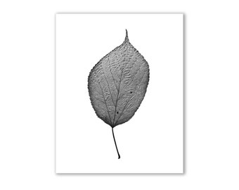 "Leaf Photography, Nature Art, - ""The Queen of the Forest"""