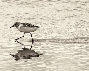 Beach Photography, Black and White Photography, Monochrome, Nature, Bird Photography, Landscape, Wall Art, Wall Decor, Home Decor, Office