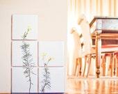 Sponte Collection | Linajola Comune details: 5 tiles 10x10cm