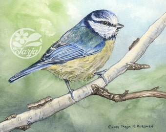 Blue Tit, Giclee print of an original Watercolor and Color Pencil Illustration.