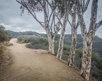 Southern California Landscape Photography, Landscape Photograph, Santa Monica Mountains, Eucalyptus Trees Photo, Secret Pathway