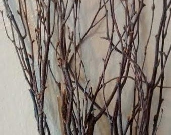 Birch Tree Branches (5 individual branches) 3'-4' OR 4'-5' - Great For Rustic Country Wedding Decorating