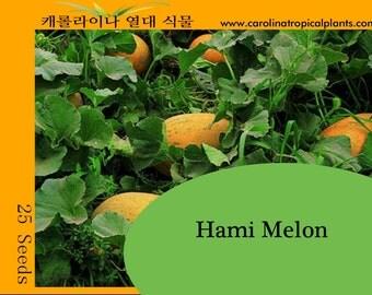 Hami Melon seeds - 25