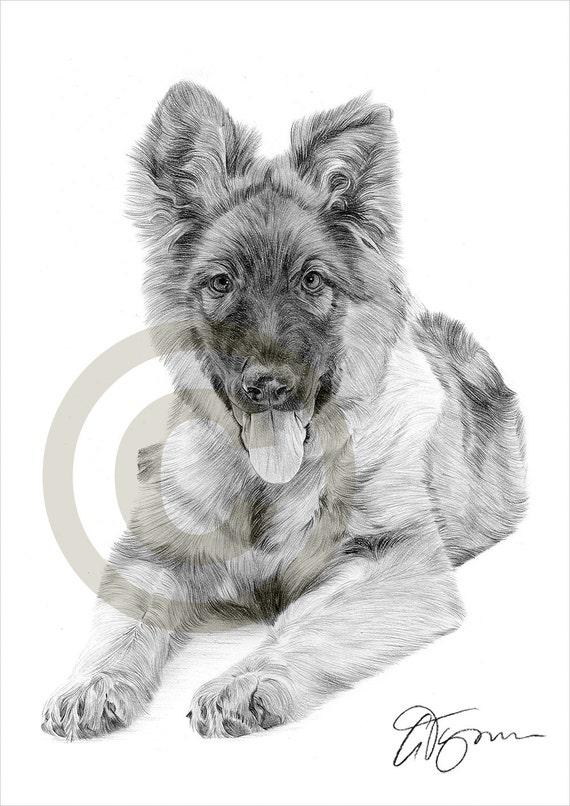 Chien chiot berger allemand dessin au crayon impression oeuvre - Dessin de chien berger allemand ...
