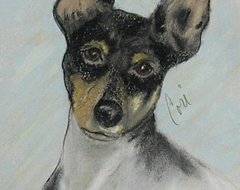 Toy Fox Terrier Dog Art Pastel Drawing By Cori Solomon