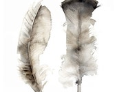 Turkey Feathers Large print