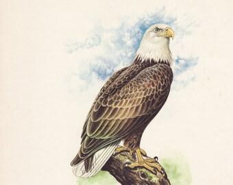 Eagle Ego - 1982 vintage book illustration page