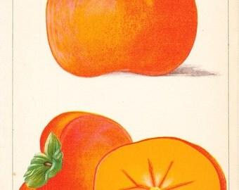 1887 Fruit Print - Yemon - Vintage Home Kitchen Food Decor Plant Art Illustration Great for Framing 100 Years Old