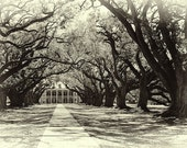Oak Alley Plantation, Black and White