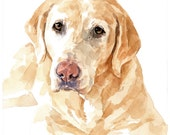 Pet Portrait - Original Watercolor 8x10, Lab, Labrador Dog