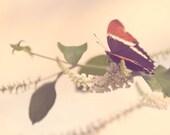 Butterfly Photography, orange, minimalist, nature print, nursery decor, wall art, botanical home decor, butterfly art print, blush pink