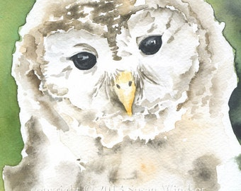 Watercolor Barred Owl Note Card Set of 6 - Woodland Animal - 5.5x4.25