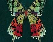 rainbow moth birthday card