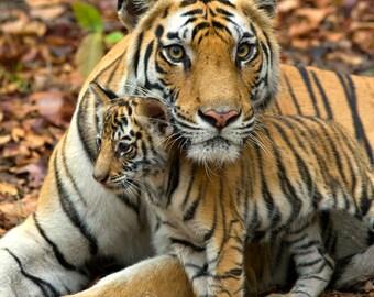Safari Nursery Decor, BABY TIGER and MOM Photo Print, Mom and Baby Animal Photography, Wildlife Photograph, Nursery Art, Home Decor, Cute