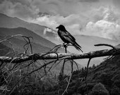 Raven Sentinel watching over Misty Mountains in the Smoky Mountain National Park in Tennessee A Black and White Bird Nature Photograph