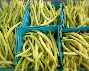 CLEARANCE SALE! Superior Flavored Bush Bean Rocdor Yellow Wax Organic Heirloom Gourmet Rare