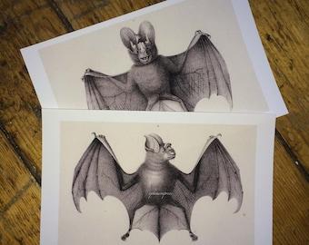 set of 2 bats by brodtman glorious creepy nature print no. 1 & 2