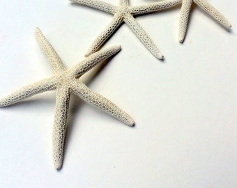 """White Starfish 3""""-4""""  With a free Air Plant Perfect little addition to your wedding decorations, centerpieces, bouquets or invitations"""