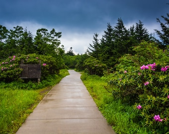 The Roan Mountain Rhododendron Gardens, near Carvers Gap, Tennessee - Nature Photography Fine Art Print or Wrapped Canvas