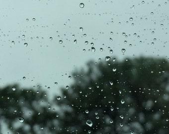 Nature Photography, Rainy Day, Trees, Photo Print