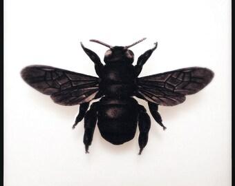 Sepia Honey Bee Brooch - X Bee Brooch - Sepia Illustration Pin