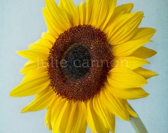 Yellow Sunflower Photograph - Sunflower Photography - Nature Photography  - Home Decor - Fine Art Print - Nursery Decor - Bedroom Decor