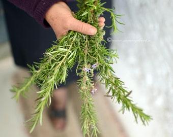 Rosemary, Wild Rosemary, Osmarinus officinalis, gourmet garden, culinary herbs, Greece,  Natural Dried Rosemary, 30gr