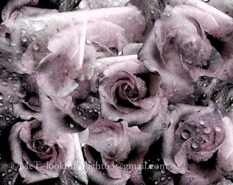 Abstract Flower Photography, Flower Photo, Pink Purple Floral, Pink Rose Photo Art, Abstract Pink, purple Rose & Raindrops, Floral Fine art