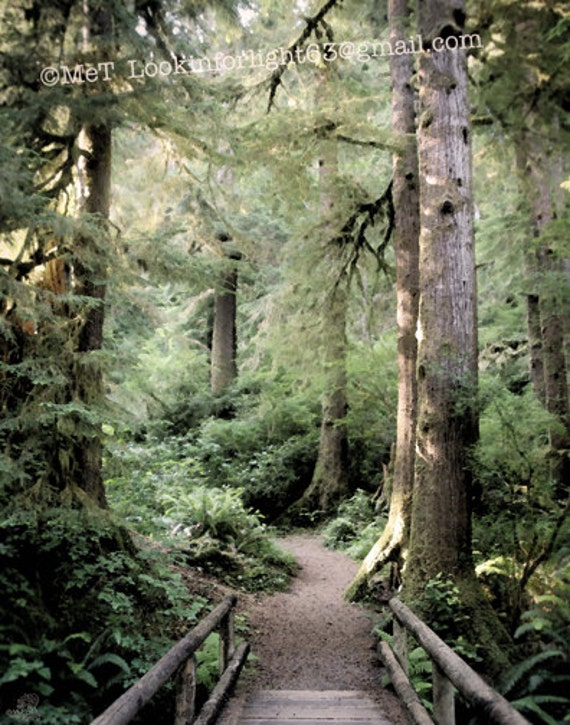 Forest Photo, Oregon woodlands, Oregon Nature Art, Tree Print, Impressionist photo, Serene Art, Path into the Forest Photo, Cape Perpetua