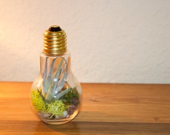 live moss and tillandsia terrarium lightbulb