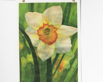 white daffodil flower watercolor art print, spring botanical painting, green and white nature wall decor