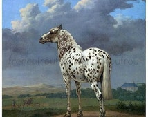 antique victorian illustration leopard spotted horse appaloosa  DIGITAL DOWNLOAD
