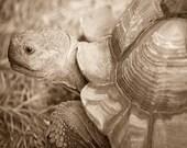 Sepia Photograph, Tortoise Art, Wildlife Photography, Nature Wall Decor, Animal Print Art, Fine Art Photography, Nature Lovers Art