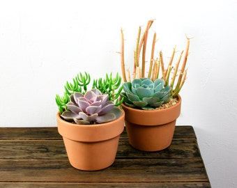 Succulent Clay Planter Duo Echeveria/ Tetragona/ Sticks on Fire
