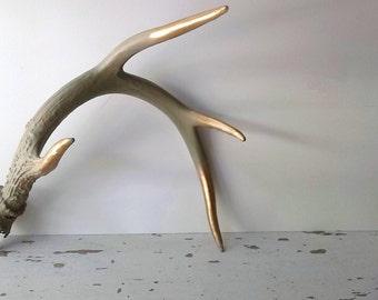 Rustic Painted Deer Antler. Sage Green Gold Tipped Antler. Natural Shed Antler