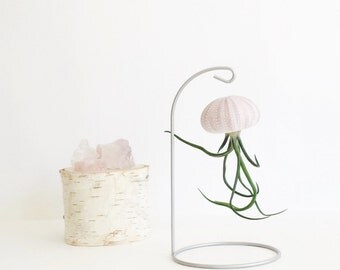 Air Plant Hanging Stand//Valentine's Day Gift