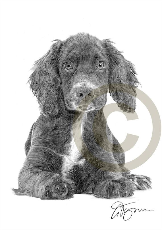 Matita di cocker spaniel cucciolo cane disegno opera di for Disegni a matita di cani