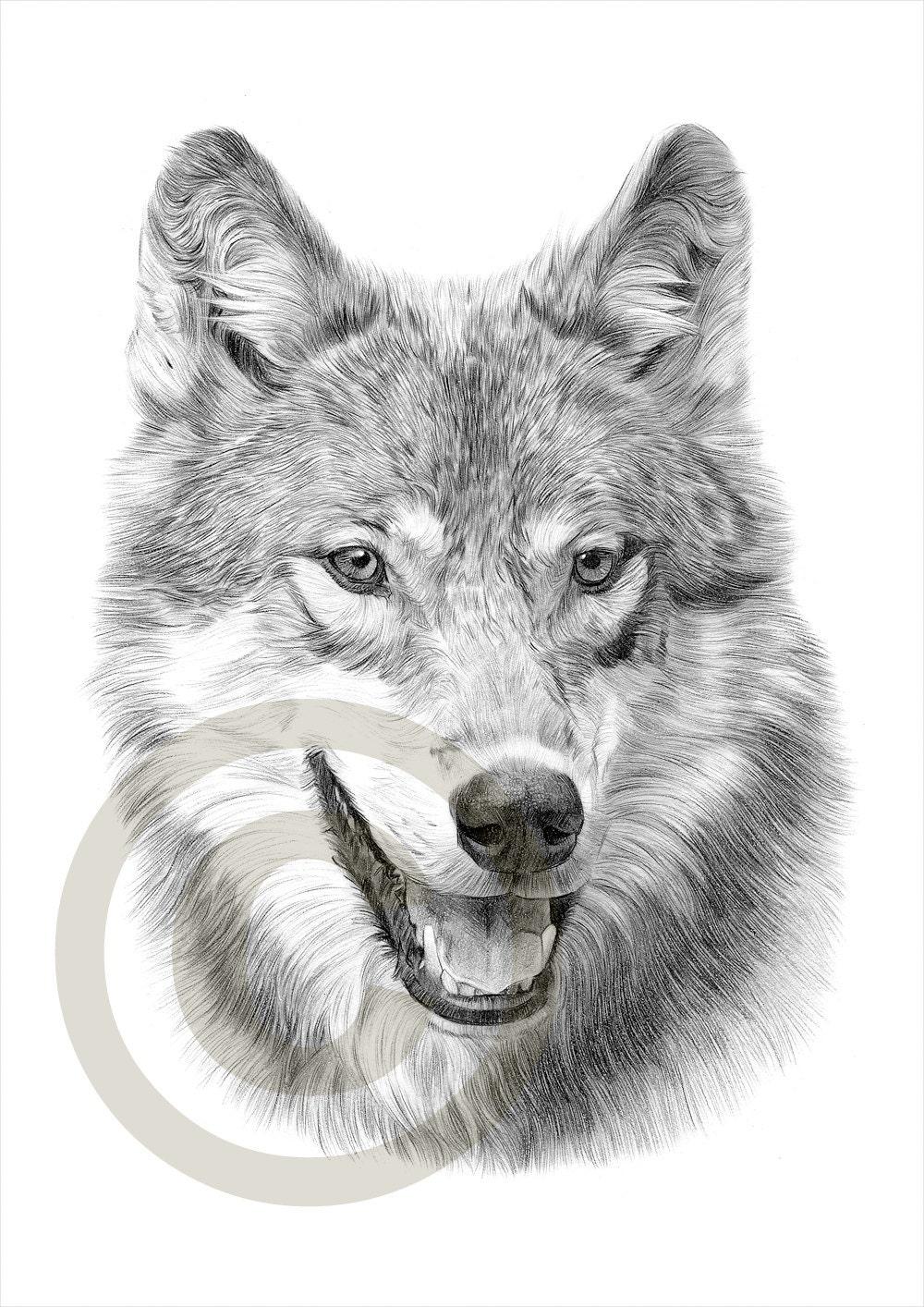 Matita grigio lupo disegno opera di formato a4 stampa for Disegno gatto facile