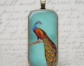 Vintage Peacock in Teal - Rounded Rectangle Glass Pendant in Antique Gold Bezel