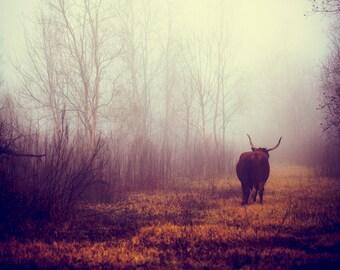 Mythology - Longhorn Decor, Texas Photography, Fog, Rural, Cowboy Culture, Magical, Agricultural, Print, Mysterious