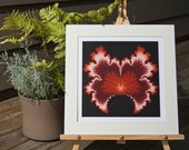 Red Maple, Matted Fractal Print