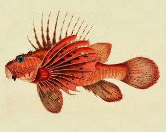 vintage fish print, DIY beach cottage home decor, a vintage printable image, no. 689.