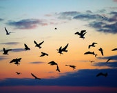 Seagull Silhouettes: fine art nature photograph print of flock of seagull birds and sunset sky (orange, black, purple, blue)