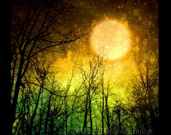Orange Winter Moon, Night Sky Photo, Surreal, Abstract Art Print, Tree Photo, Forest, Black, Cosmic, 5x5 inch Fine Art Photograph, Still