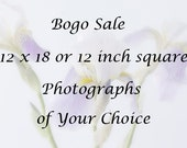 12 x 12 or 12 x 18 Photographs of Your Choice, Buy One Photograph Get the Rest for  Half  Price