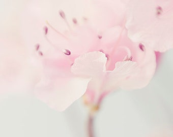 Pink Flower Print, Azalea Photo, Floral Art Print,  Bedroom Art, Nursery Print, Flower Photography, Pink Wall Decor